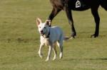 frida_horse