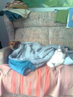 kifli and spenot in the bed