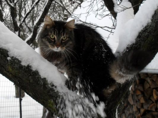 maki on the tree