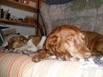 Kifli & Dingo