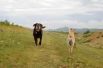 Lori and Maggie