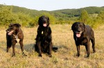Buddy, Duke and Kfir