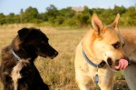 Buddy and Ronja
