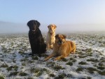 Duke, Kara and Csoki
