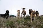 Grover, Coco, Kara, Cikk-cakk, Murphy, Csoki and Kyra