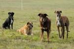 Mila, Csoki, Murphy and Cikk-cakk