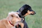 Izzie and Alvin