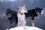 Eééie, Maud and Alvin